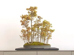 Bonsai at Time & Style